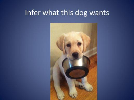Infer what this dog wants