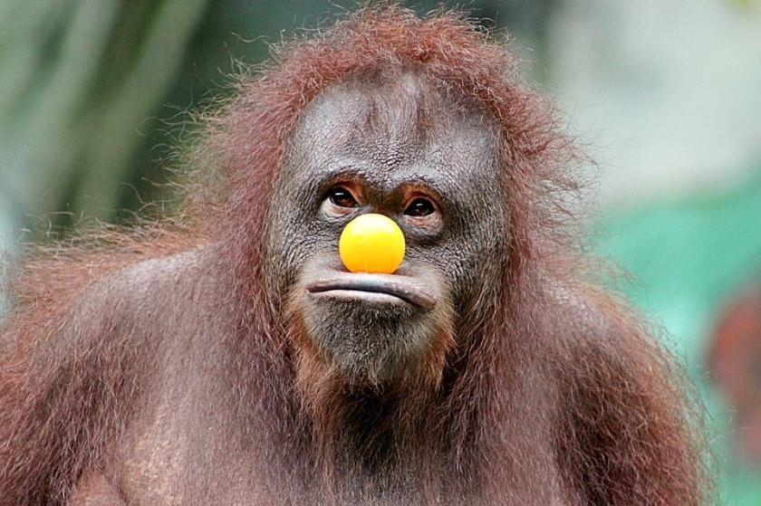 monkey-2753916_960_720